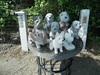Granite dogs